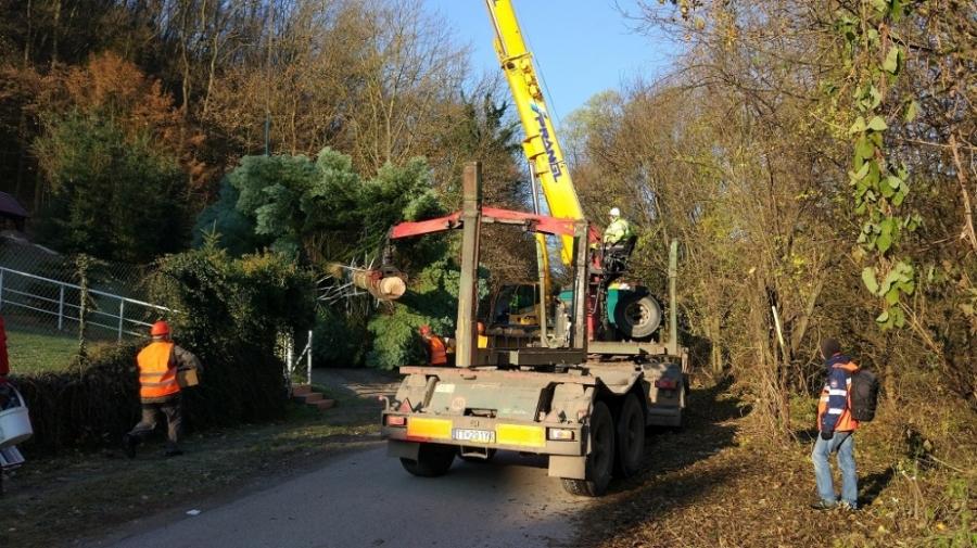 Bruselské hlavné námestie bude zdobiť vianočný strom z Horných Orešian, foto 2