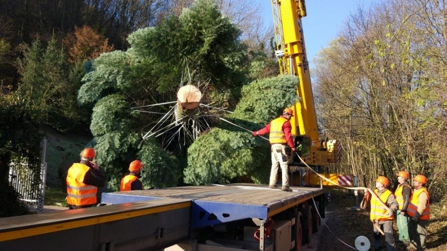 Bruselské hlavné námestie bude zdobiť vianočný strom z Horných Orešian, foto 4