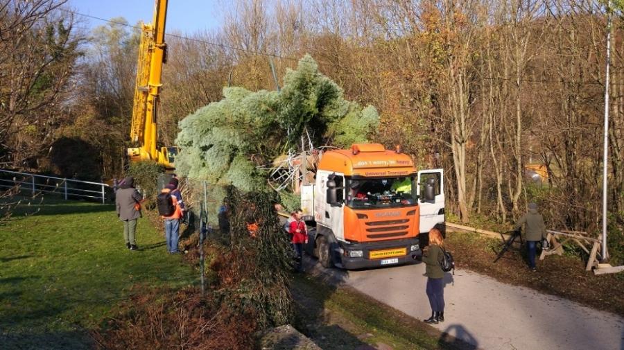 Bruselské hlavné námestie bude zdobiť vianočný strom z Horných Orešian, foto 6