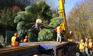 Bruselské hlavné námestie bude zdobiť vianočný strom z Horných Orešian