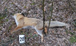 Na Záhorí našli uhynuté zvieratá, niekto ich pravdepodobne otrávil